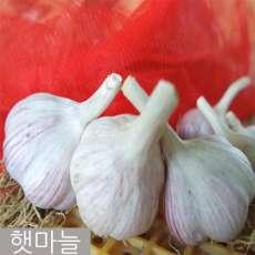 [예천토종마늘작목반] 햇마늘 소1접(100개) 약2kg